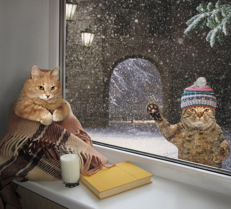 Gato en el travesaño y su amigo 2 imagen de archivo libre de regalías