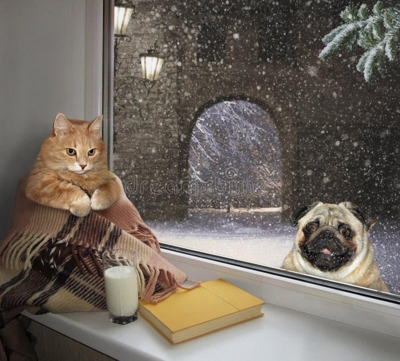 Gato en el travesaño y un perro afuera fotografía de archivo