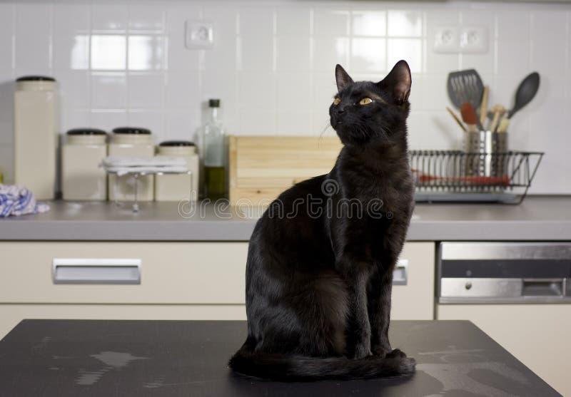 Gato en el vector foto de archivo