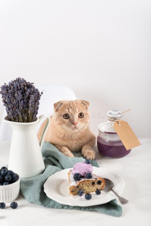 Gato en esperar de la tabla delicioso Torta del arándano con la bola del helado y confitura en tarro imagen de archivo