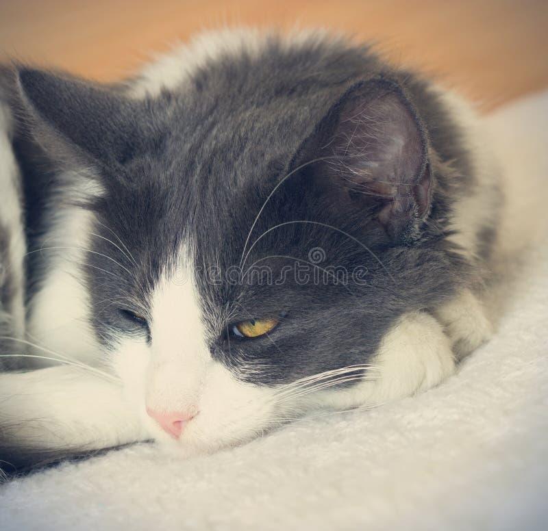 gato en estilo retro foto de archivo