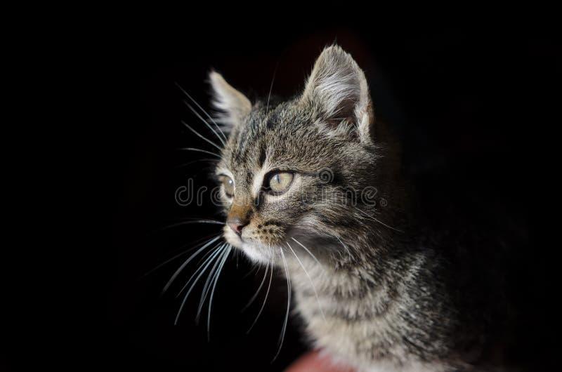 Gato en fondo negro fotografía de archivo