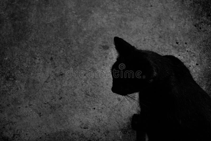 Gato en Halloween blanco y negro fotos de archivo