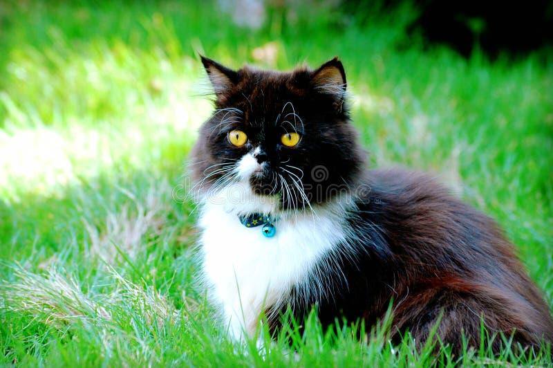 Gato en hierba verde foto de archivo libre de regalías