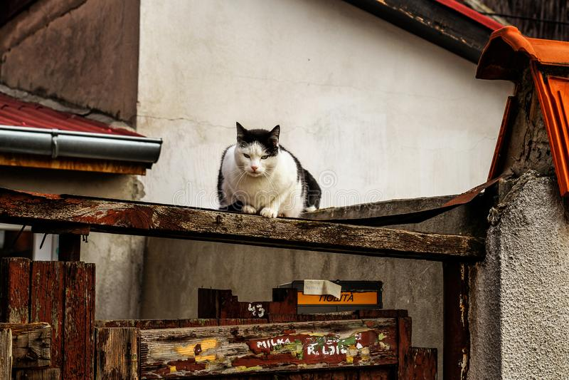 Download Gato en la azotea foto de archivo. Imagen de pets, chimenea - 100532192
