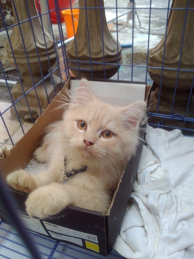 Gato en la caja foto de archivo libre de regalías