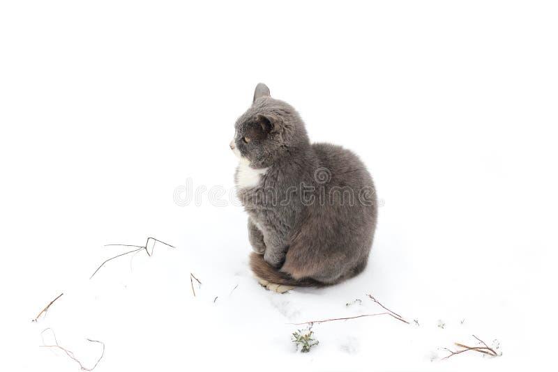 Gato en la calle en invierno foto de archivo libre de regalías
