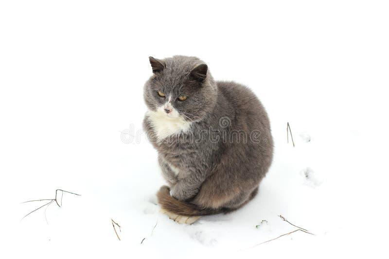Gato en la calle en invierno fotografía de archivo libre de regalías