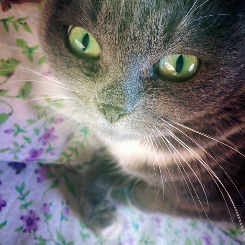 Gato en la cama fotografía de archivo