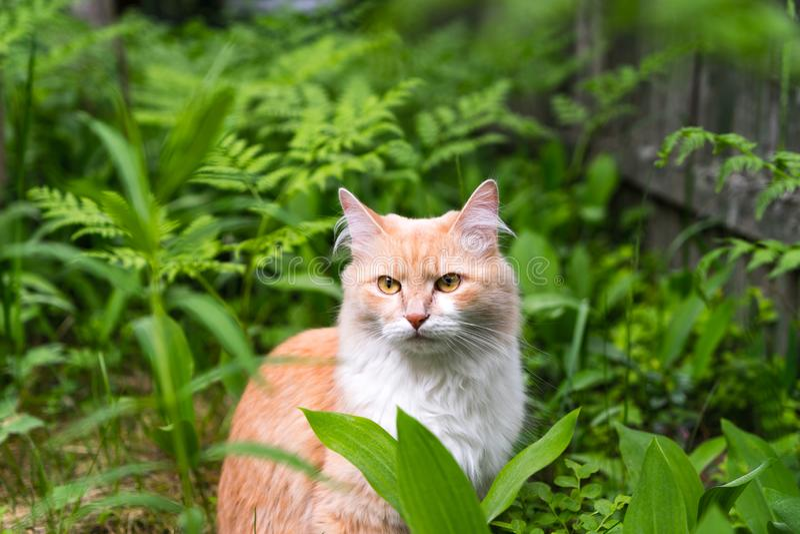 Gato en la hierba, gato en el bosque imagenes de archivo