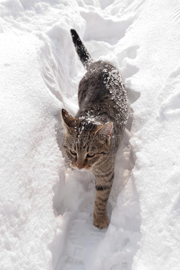 Gato en la nieve foto de archivo