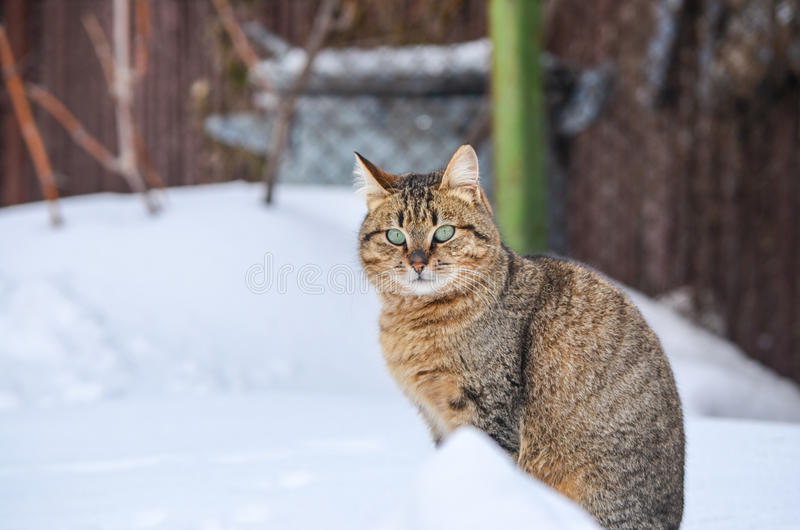 Gato en la nieve imagenes de archivo