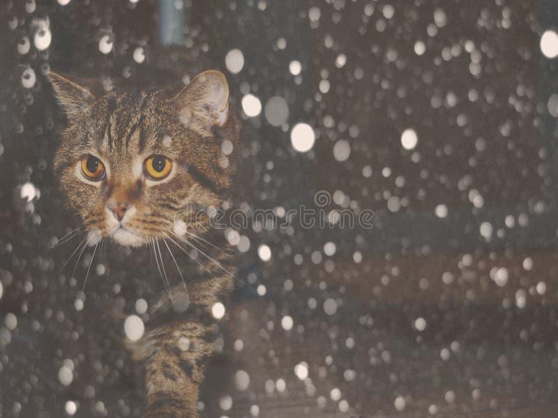 Gato en la nieve en la noche imagen de archivo