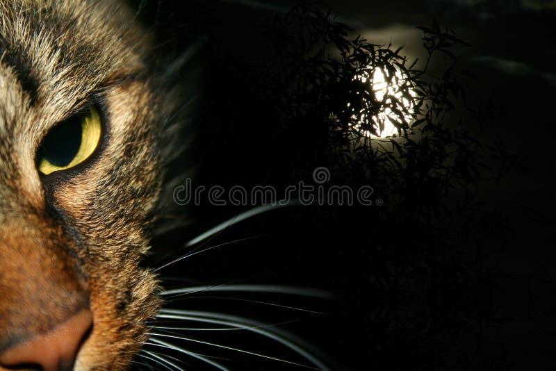 Gato en la noche fotografía de archivo