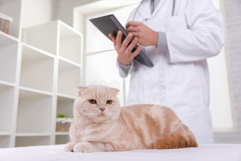 Gato en la recepci?n en el veterinario imagen de archivo libre de regalías