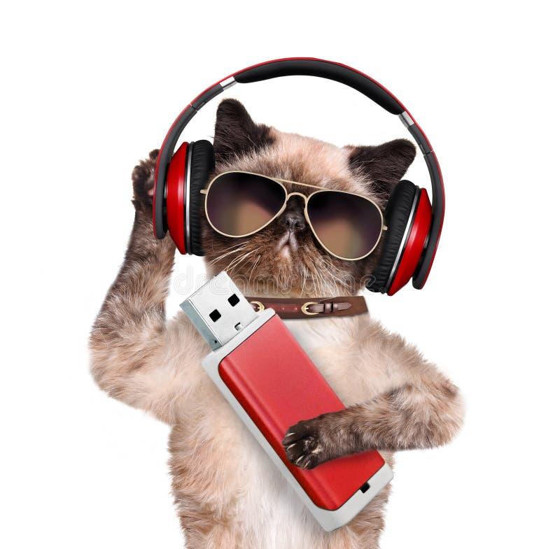 Gato en los auriculares que llevan a cabo un flash de la pata imagen de archivo
