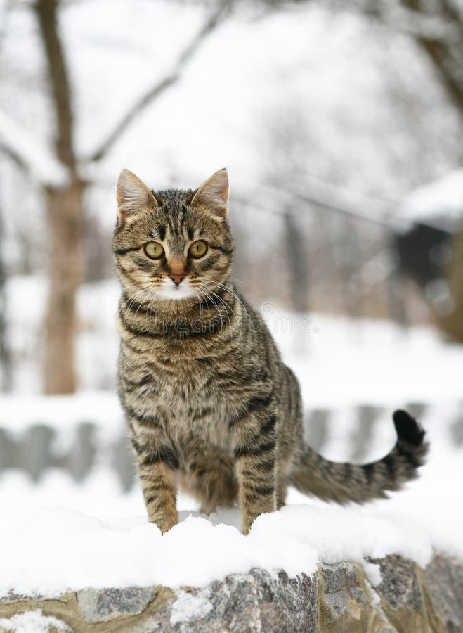 Gato en nieve. foto de archivo