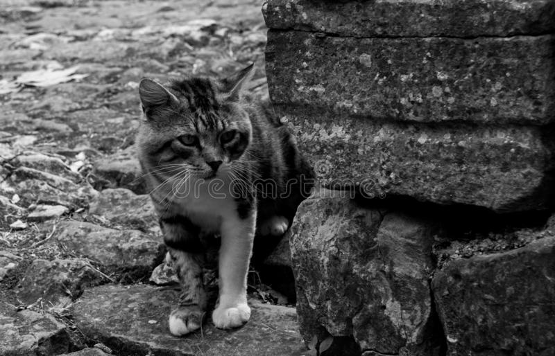 Gato en Oprtalj fotografía de archivo libre de regalías