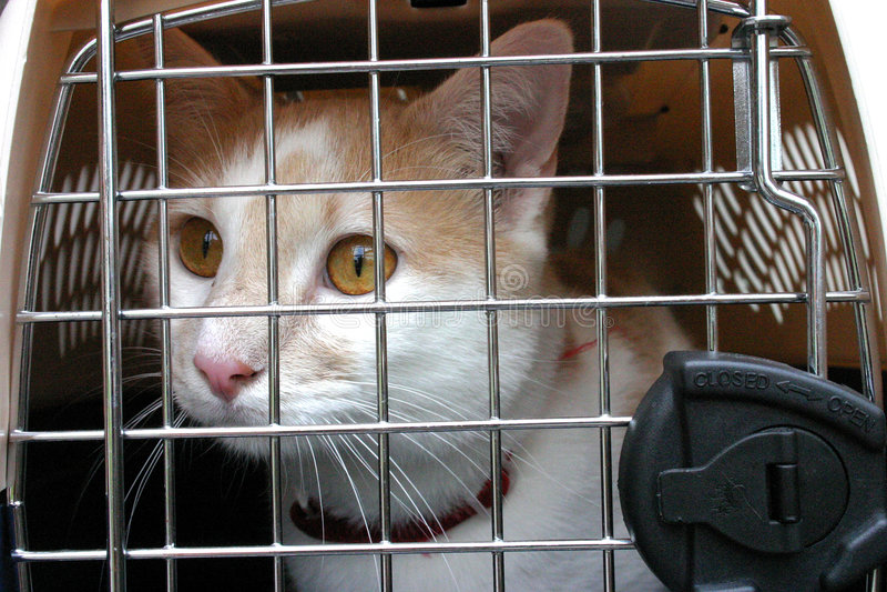 Gato en portador de la jaula fotografía de archivo libre de regalías