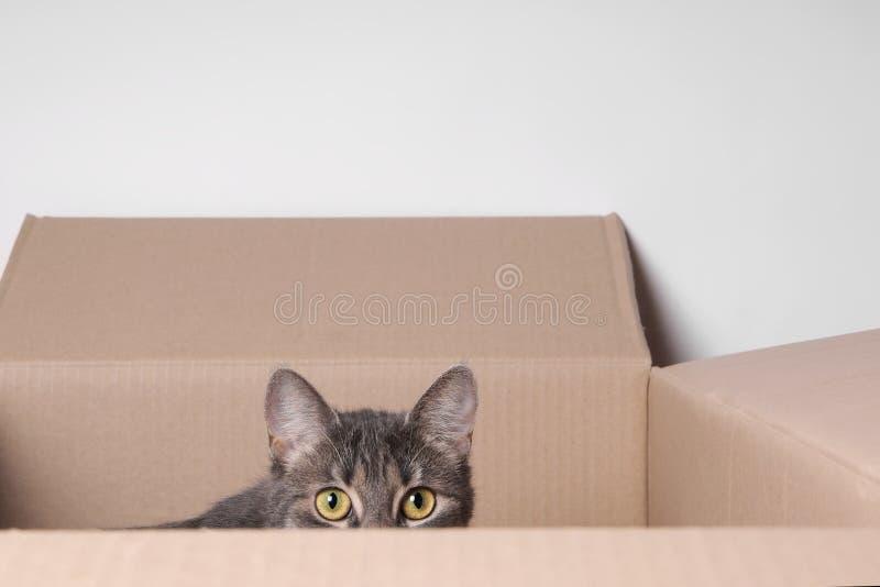 Gato en rectángulo fotos de archivo libres de regalías