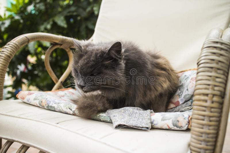 Gato en silla fotos de archivo