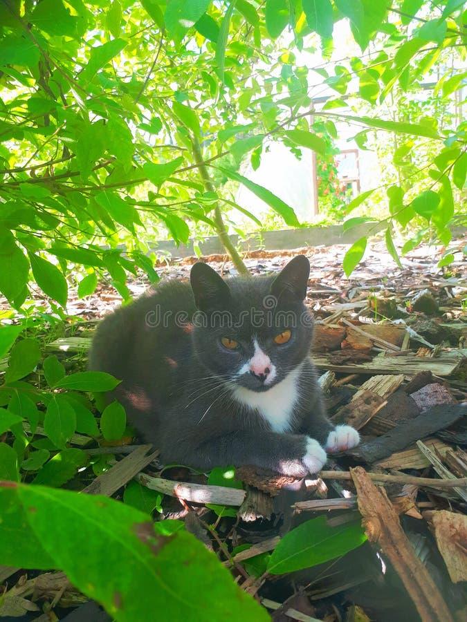 Gato en sombra imagen de archivo libre de regalías