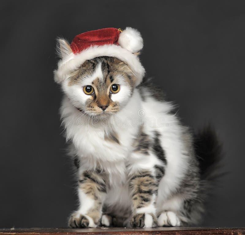 Gato en sombrero de la Navidad fotos de archivo libres de regalías
