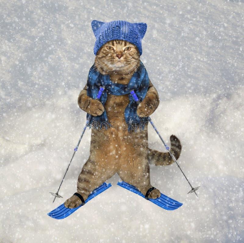 Gato en sombrero hecho punto en los esquís 2 foto de archivo libre de regalías