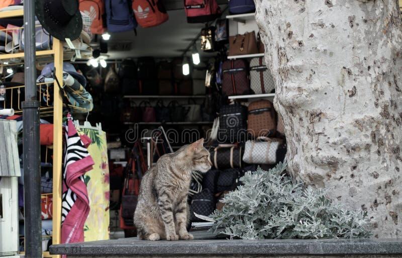 Gato en tienda imagenes de archivo