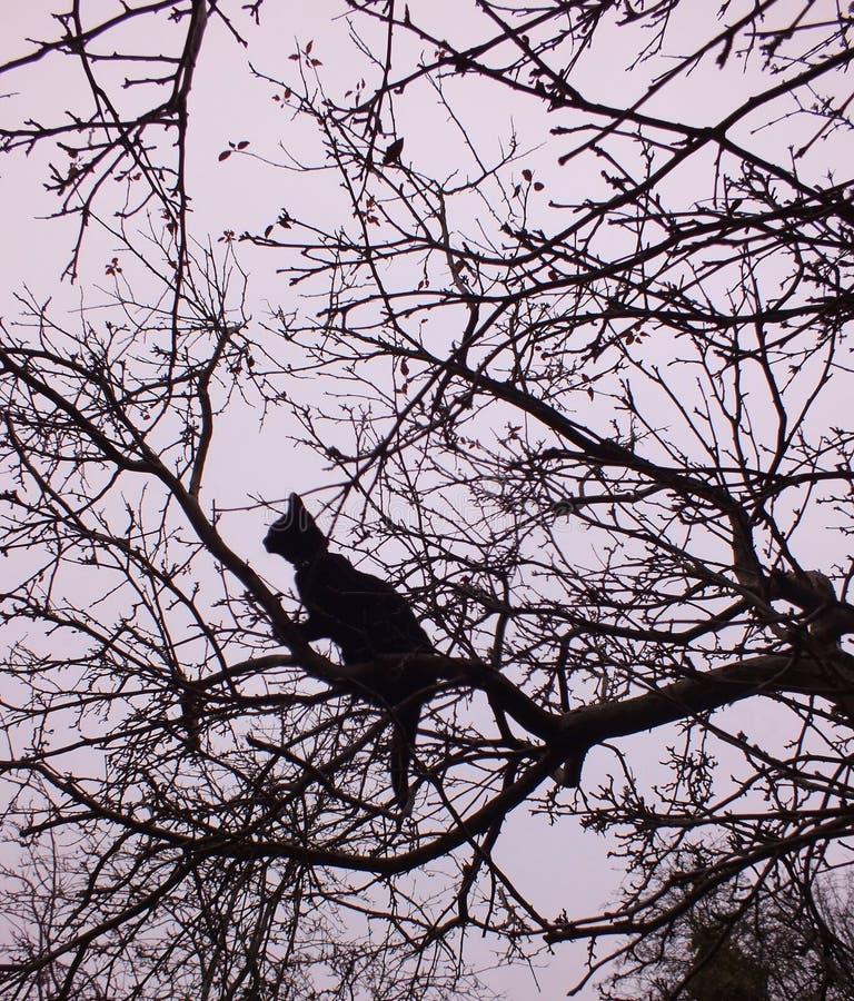 Gato en un árbol fotografía de archivo