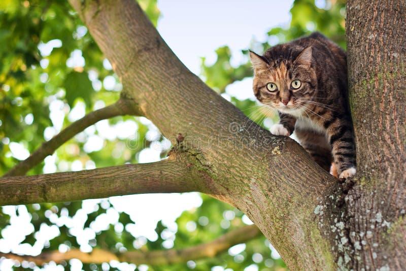 Gato en un árbol imagenes de archivo