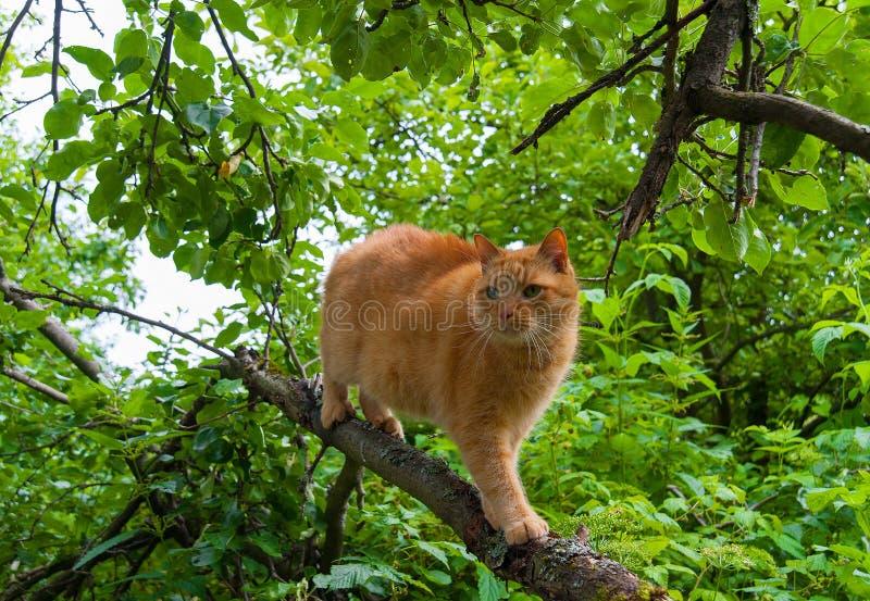 Gato en un árbol en el verano fotos de archivo