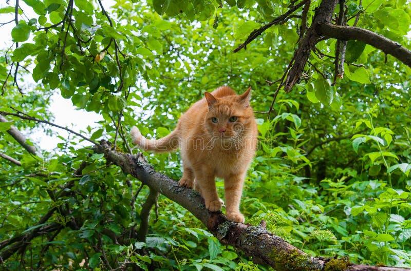Gato en un árbol en el verano fotos de archivo libres de regalías