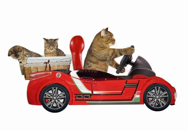 Gato en un coche rojo 3 foto de archivo