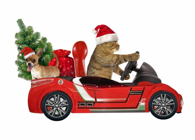Gato en un coche rojo con el árbol 1 fotografía de archivo