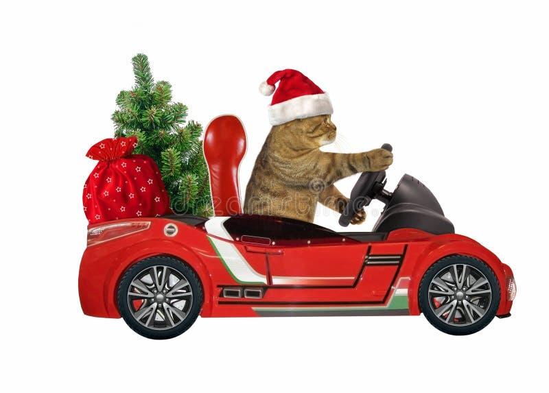 Gato en un coche rojo con el árbol 2 imagen de archivo