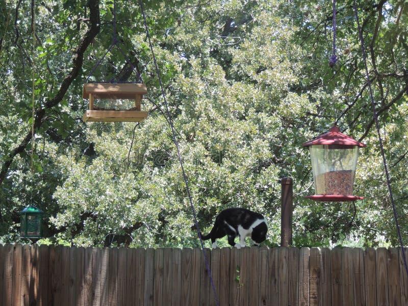 Gato en una cerca Bird Watching fotos de archivo libres de regalías