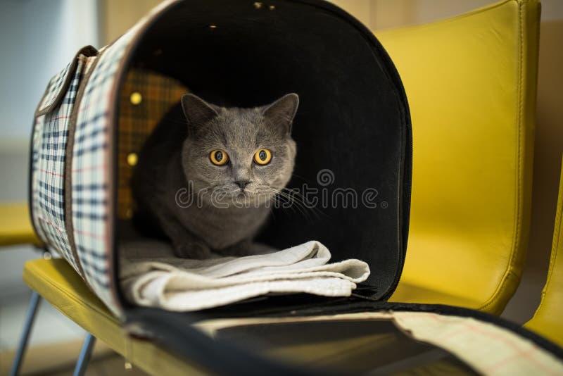 Gato en una clínica veterinaria imagen de archivo