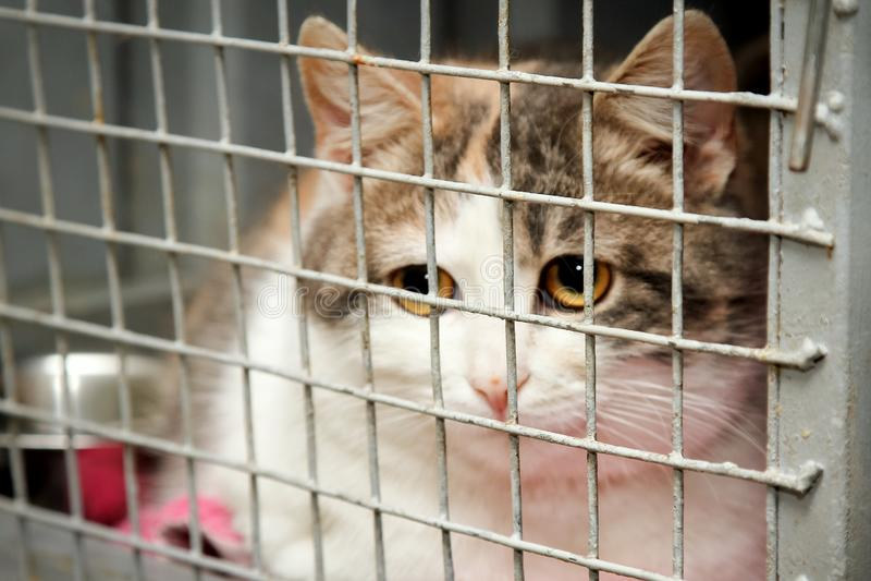 Gato en una jaula en un refugio para animales foto de archivo