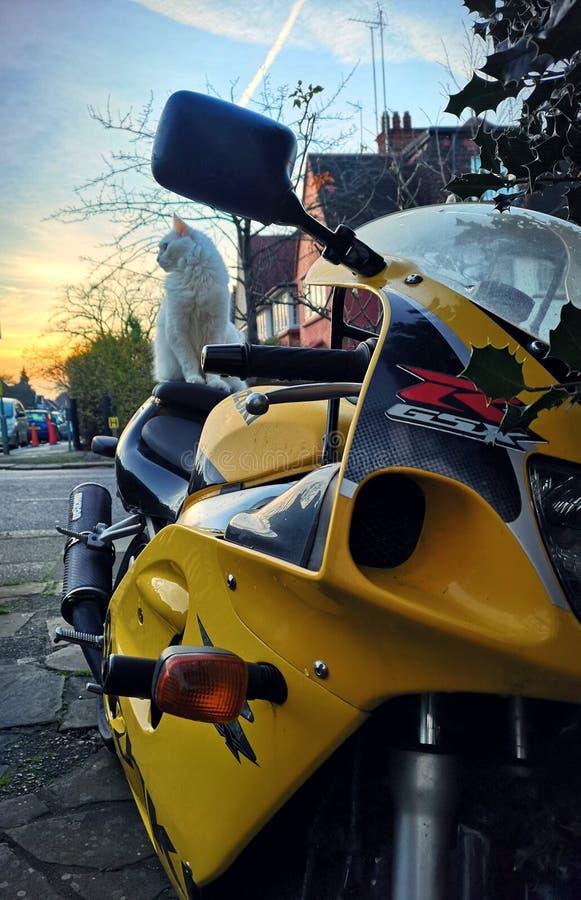 Gato en una motocicleta fotografía de archivo libre de regalías