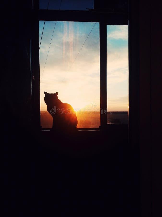 Gato en ventana fotografía de archivo