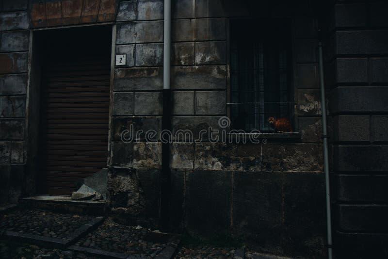 Gato en ventana en la calle oscura imagen de archivo libre de regalías