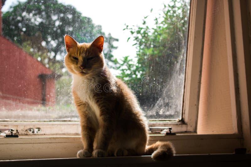 Gato en windowsill foto de archivo
