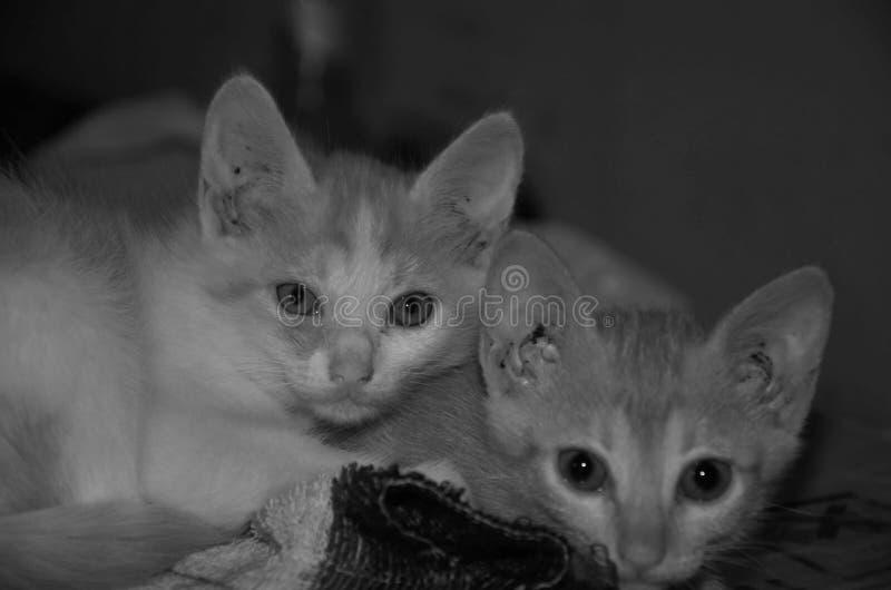 Gato encantador foto de archivo