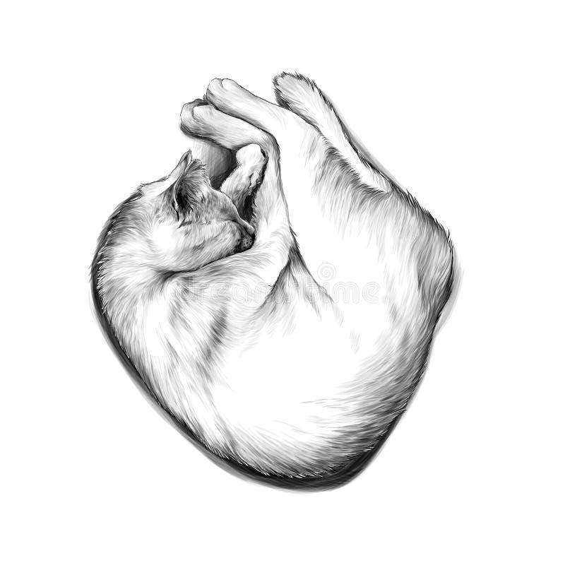 Gato encrespado para arriba en una bola y dormir libre illustration