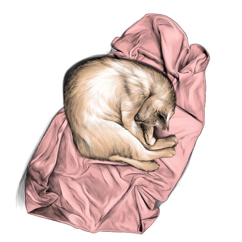Gato encrespado para arriba en una bola y dormir en una toalla o una visi?n superior combinada ilustración del vector