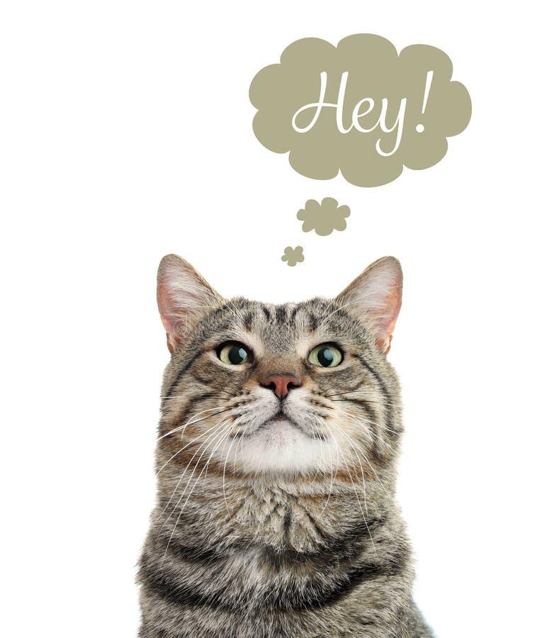 Gato engraçado com bolha do pensamento e palavra HEY fotografia de stock
