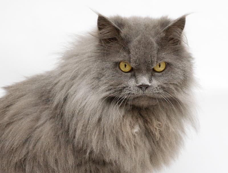 Gato engraçado no fundo branco fotos de stock