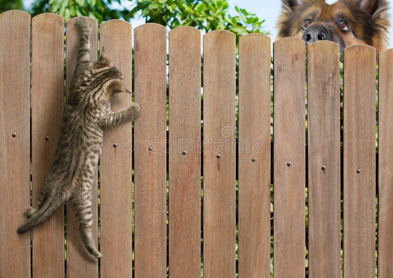 Gato engraçado pendurado na cerca e cão grande atrás fotos de stock