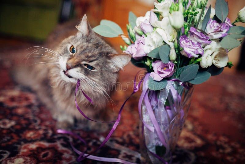 Gato engraçado que come o ramalhete do casamento imagem de stock